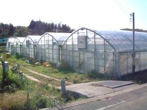 フルーツトマトの光農園